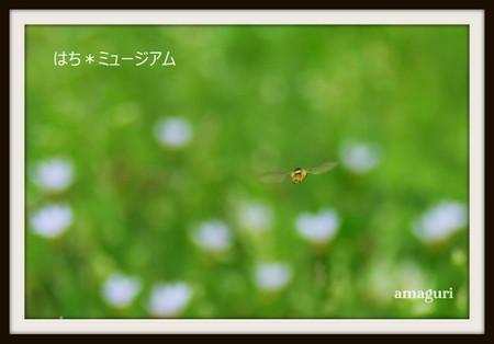 Amaguri_6