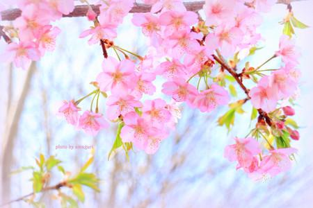 Img_0145amaguri002